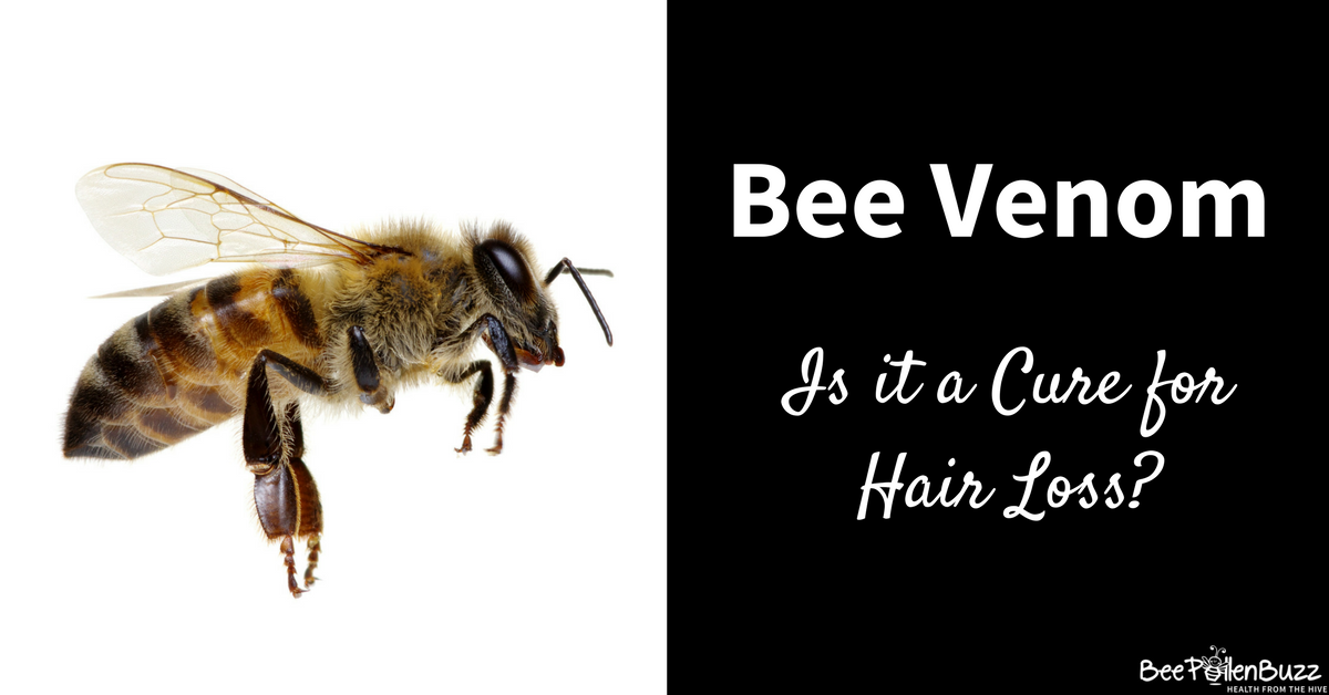 Bee Venom Treats Baldness